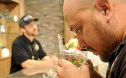 Oxnard sets regulations for pot