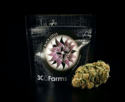 Black lotus marijuana flower
