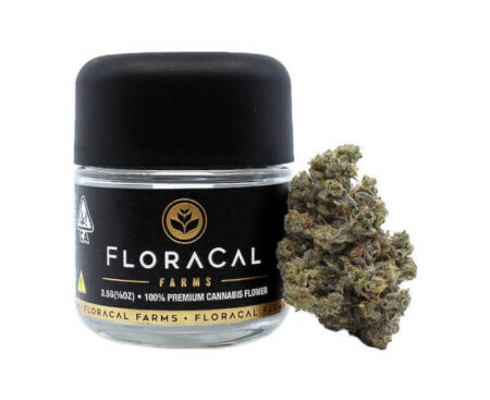 Floracal Junkie funnel cake jar available at local cannabis dispensaries in Port Hueneme and Ojai, CA